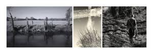 Riverbank Triptych