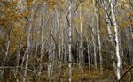 Glenbower Woods 1
