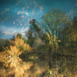 Blackwater reflection