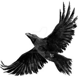 Sebastian Illustration Raven 2020