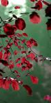 Autumn 5 by DeKatsche
