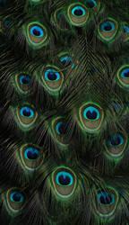 Peacock by DeKatsche