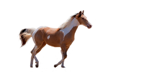 Precut: Paint Horse