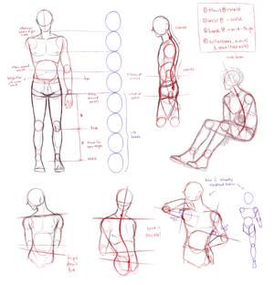 dude anatomy