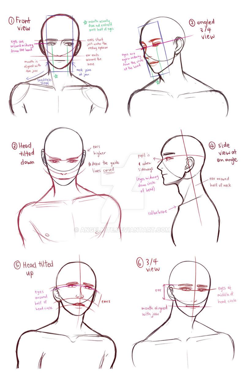 drawing busts