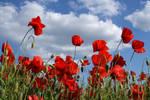 poppy field by Su58