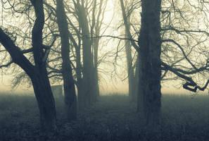 Fog 2 by Su58