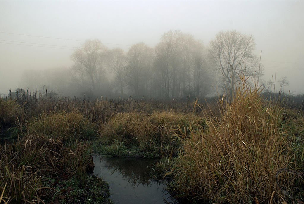Fog on the backwaters by Su58