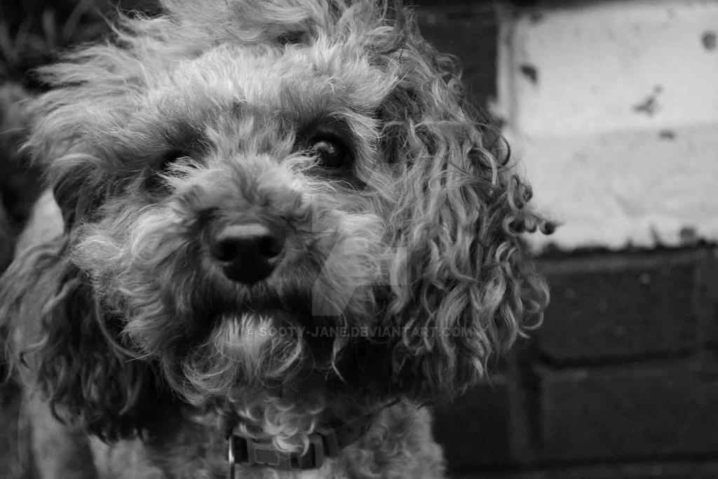 Lulu on a windy day by Sooty-Jane