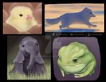 Cute Animal Studies