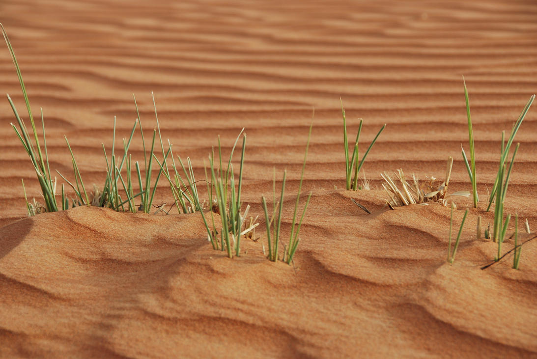 Stock 16 Grass by monarxy-stocks