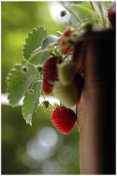 sympathy for the strawberry I by cizmelikedi