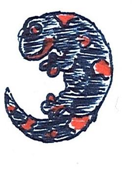 Inktober 28 - Salamander by GlyphGryphon