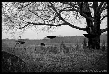 The Rain Tree by alucier