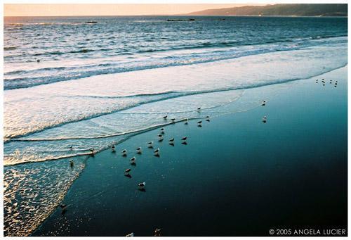Birds in the Water by alucier