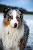 Dog in June by Langsvans