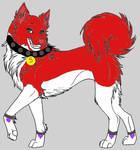 Saphira as a Husky