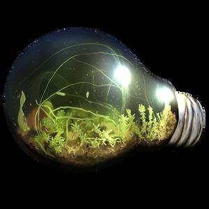 Bulb terrarium shirt