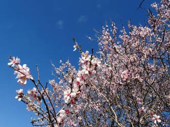 Sakura sky shirt