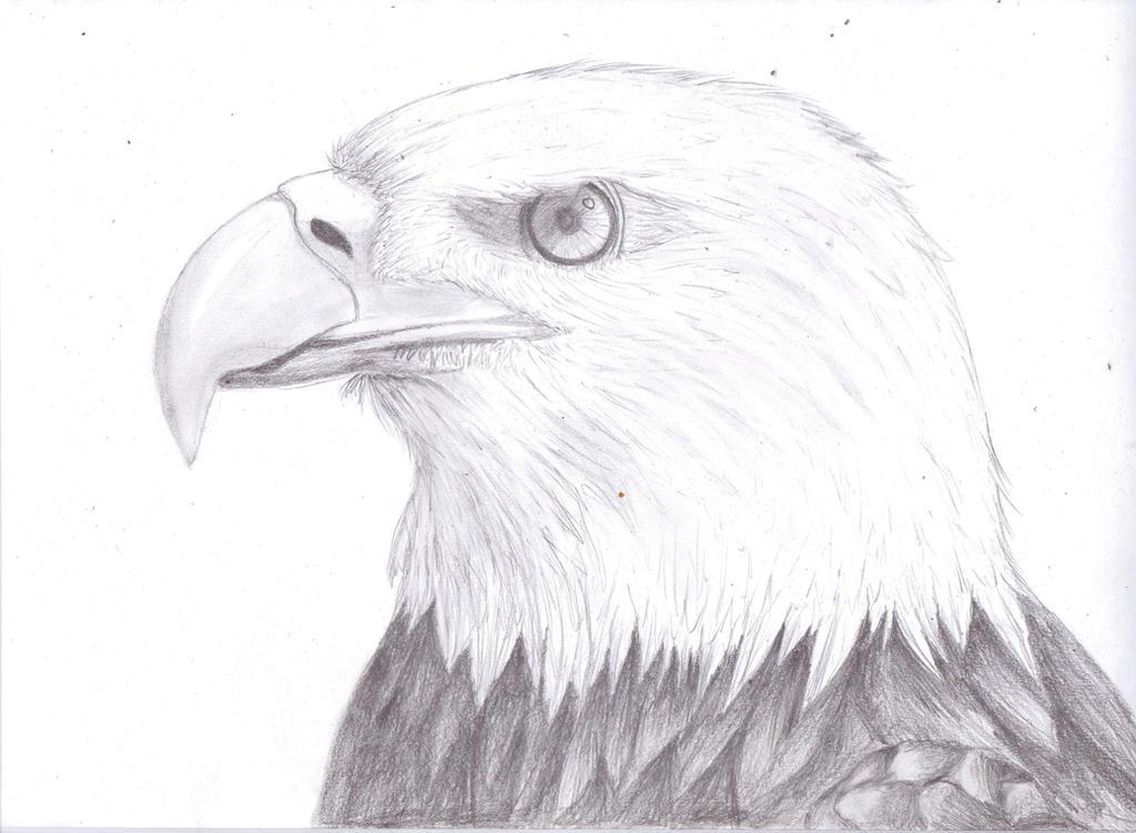 Bald Eagle by Mengtastic on DeviantArt