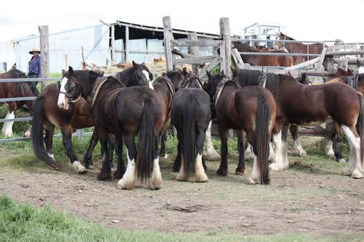 Charity Hevay Horse Day 047