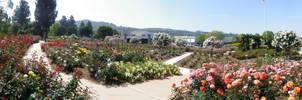 Rose Garden Panorama 2