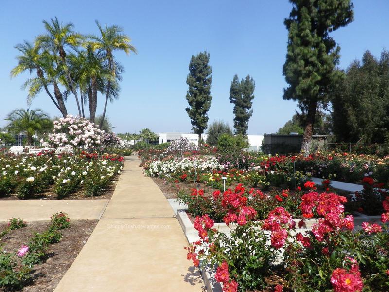 A walk through the rose garden by shippertrish on deviantart - When you walk through the garden ...
