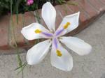 Unique Flower