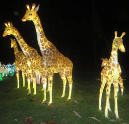 Glowing Giraffes by ShipperTrish