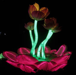 Glowing Lotus Flowers by ShipperTrish