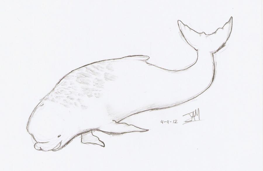Baby beluga whale drawing