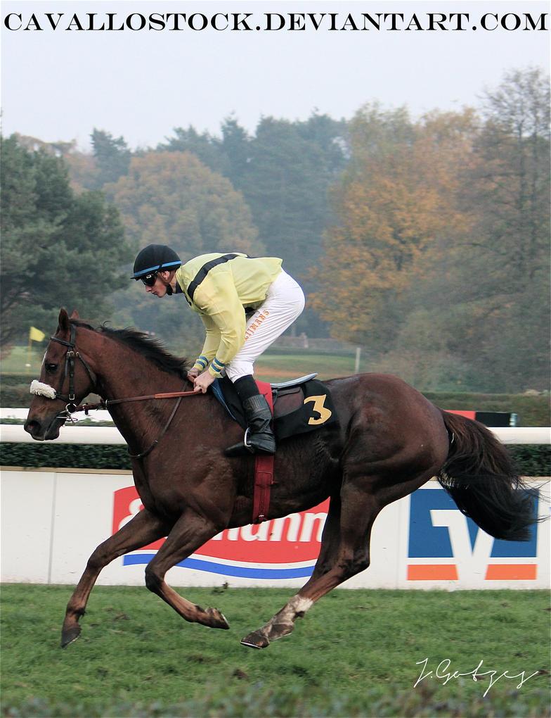 Racehorse_1 by cavallostock