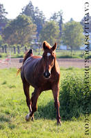 Fuchur_2 by cavallostock