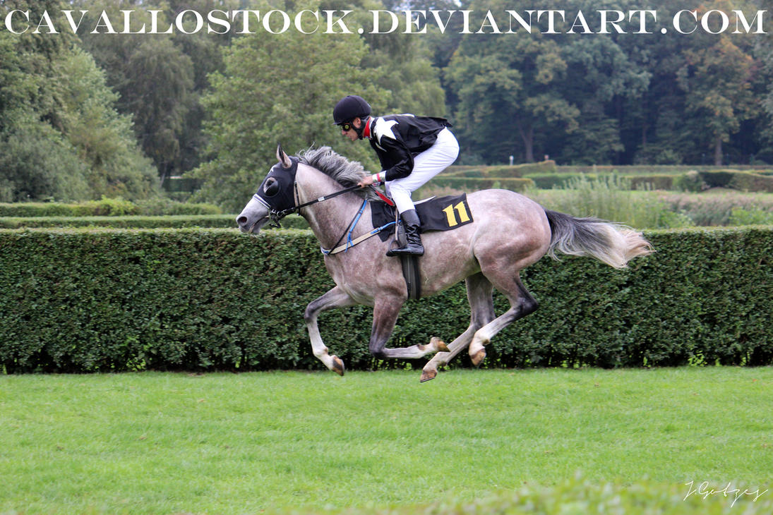Racehorse_2 by cavallostock