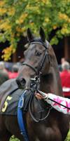 Racehorse_Portrait