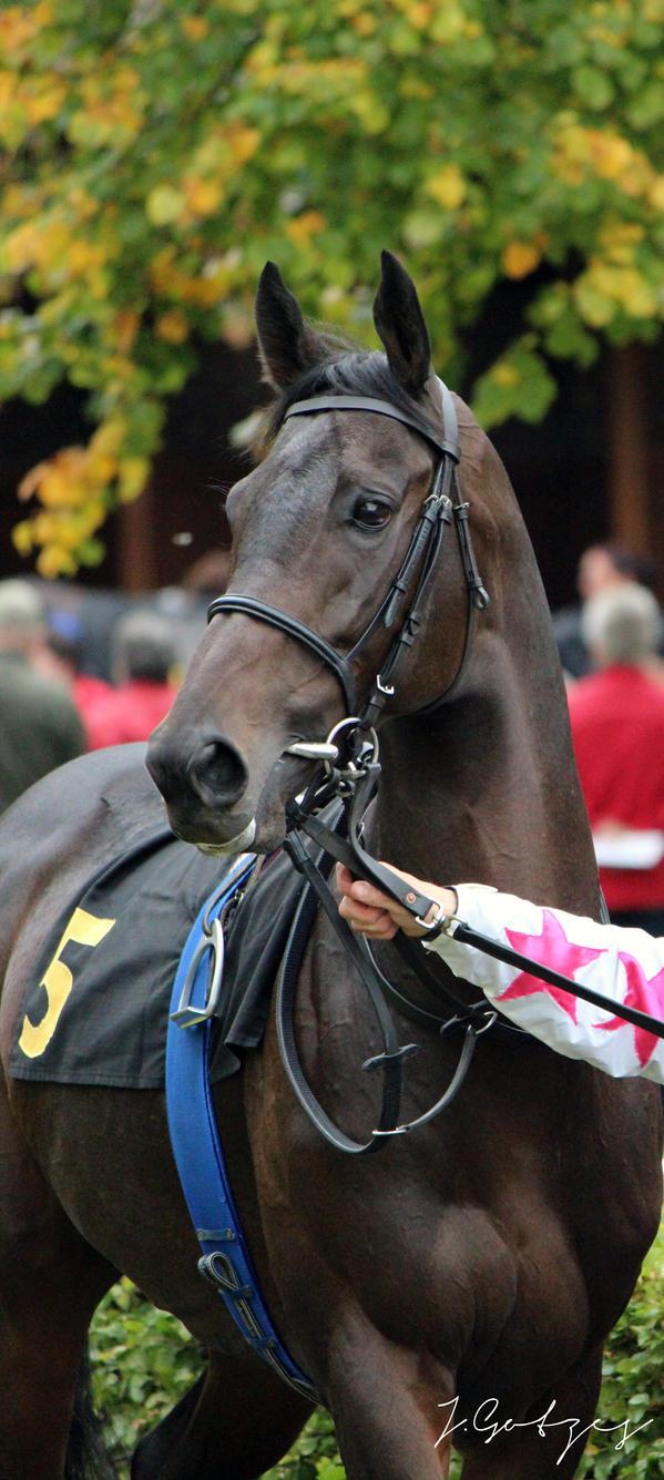 Racehorse_Portrait by cavallostock