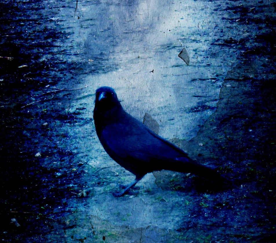 Raven by DeadlyCase