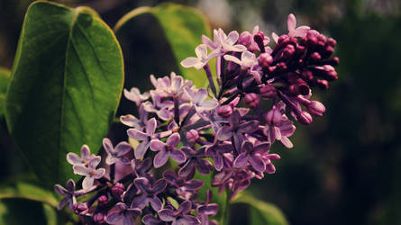 Purple FlowerCC- Canon Rebel T3i
