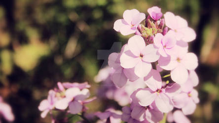 Light Purple Flower-Canon Rebel T3i