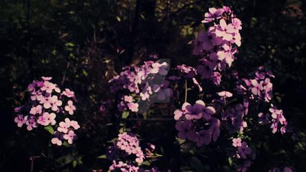 Light Purple Flower2-Canon Rebel T3i