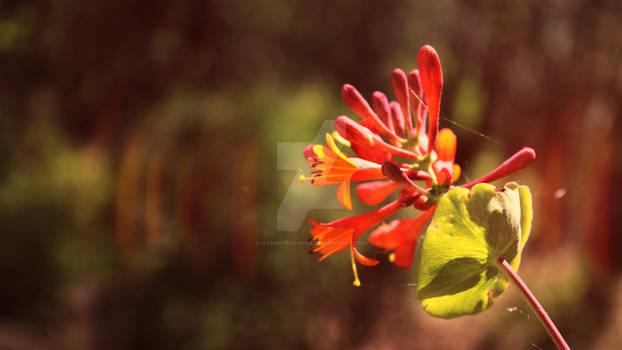 Orange Flower #1 Flower-Canon Rebel T3i