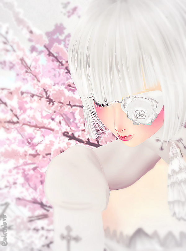 Sakura, sakura... { ShiroSpectrum } by 0oIrweno0