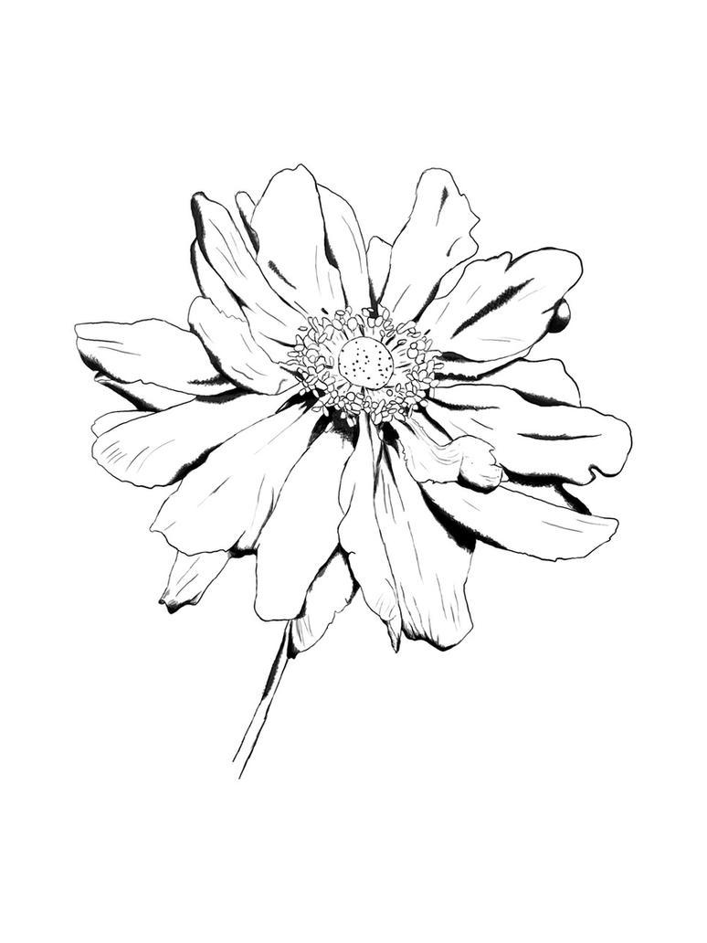 flower drawing by kingROWENA on DeviantArt