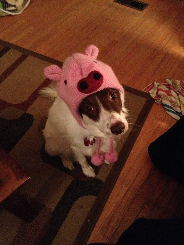 PIG-DOG by seannsgirl2005