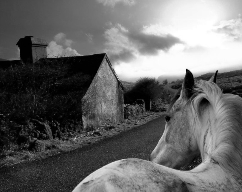 Black And White Misty : Black and white by bellemisty on deviantart