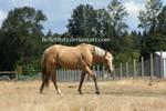 Horse Stock11
