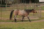 Horse Stock583