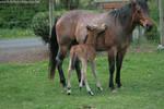 Horse Stock617