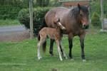 Horse Stock620