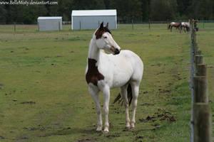 Horse Stock648